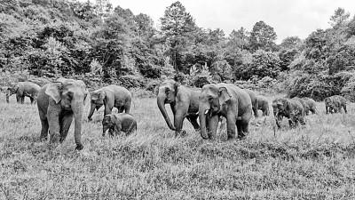 """""""The elephant group is becoming an international star""""(1)"""