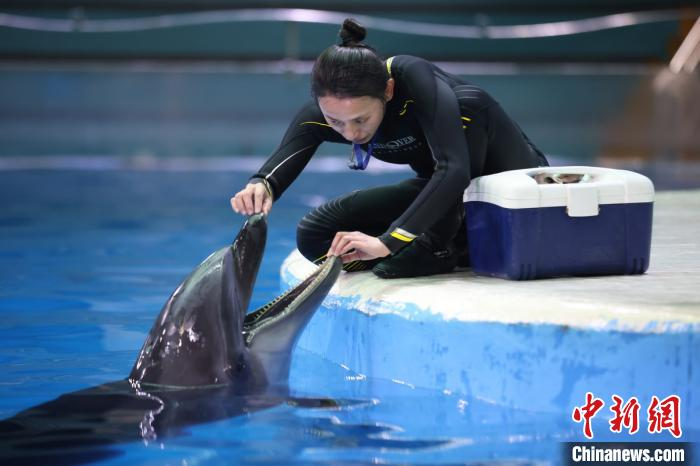 """The special """"March 8th Festival"""" of female breeders in Nanjing Underwater World"""