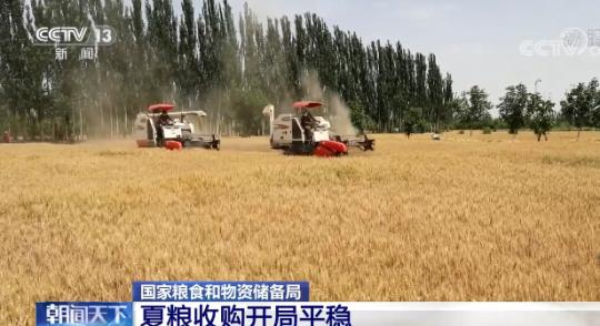 National Bureau of Grain and Material Reserves: The purchase of summer grains has a steady start, and all regions are more optimistic about the purchase price.