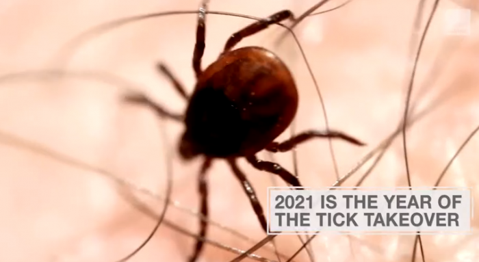 Ticks may become a big problem in most parts of the United States this summer