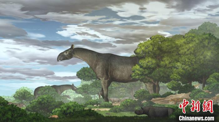 """Scientists have discovered the largest new genus of land mammals in the history of the earth: """"Linxia giant rhinoceros"""" 26.5 million years ago"""