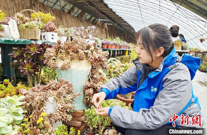 """100,000 plants in 5 greenhouses are succulent! Qinghai college girls build a """"succulent kingdom""""(1)"""
