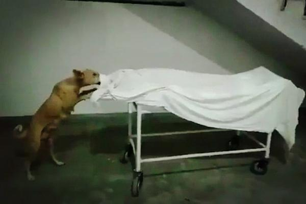 getInterUrl?uicrIvZQ=ee4f2662d5ccbc73e04134a050cfecb9 - The medical system in India has collapsed, dead bodies can be seen everywhere in hospitals, and stray dogs live by eating dead bodies